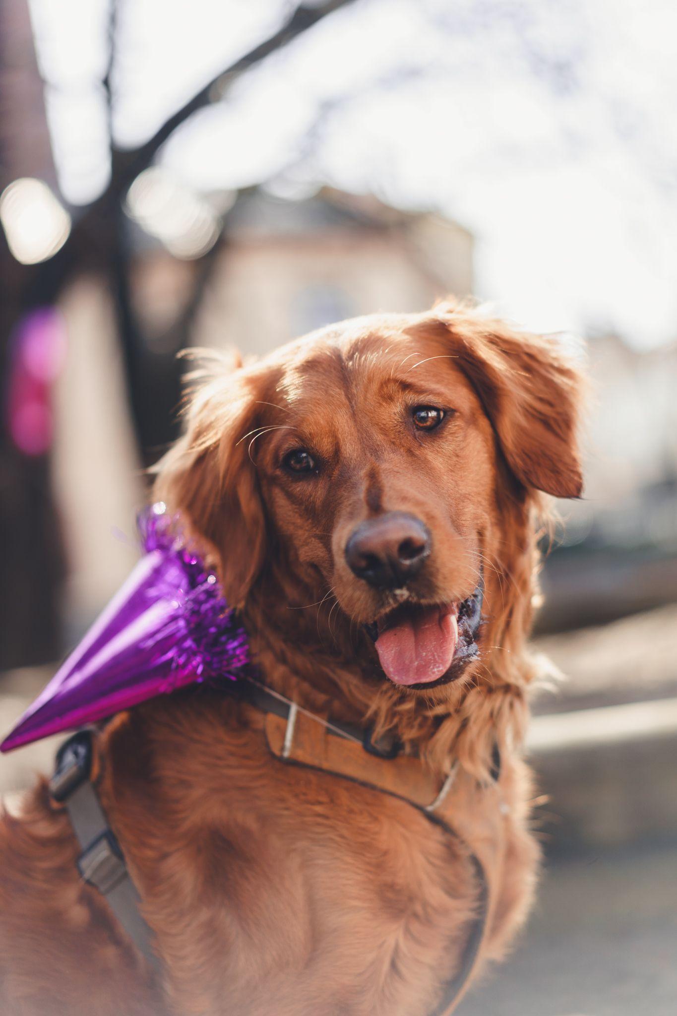 Lykkelig og frisk hund